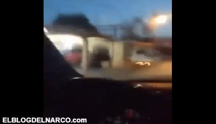Sicarios del Cártel del Golfo se graban ejecutando a halcón (VÍDEO)
