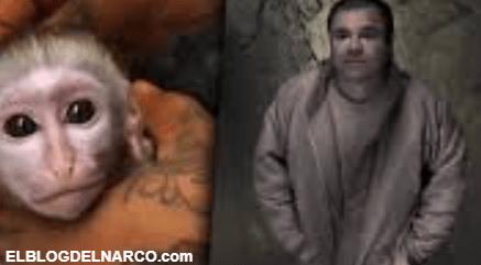 Conoce a 'Botas', el chango que delató a 'El Chapo Guzmán' no era un capo rival