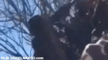 VIDEO Así se enfrentan Sicarios del CDS tirados en el monte en el triangulo dorado 'Tírale ahí'