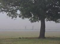 Neblina inunda en Nueva Gerona009