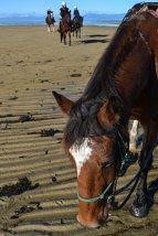Cavalls a la platja