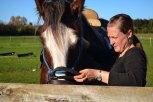 Apunt per la super classe d'equitació