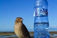 L'aigua del Pirineu a NZ