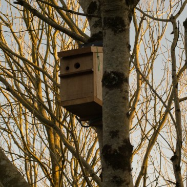 How to make a bird box and other thoughts.