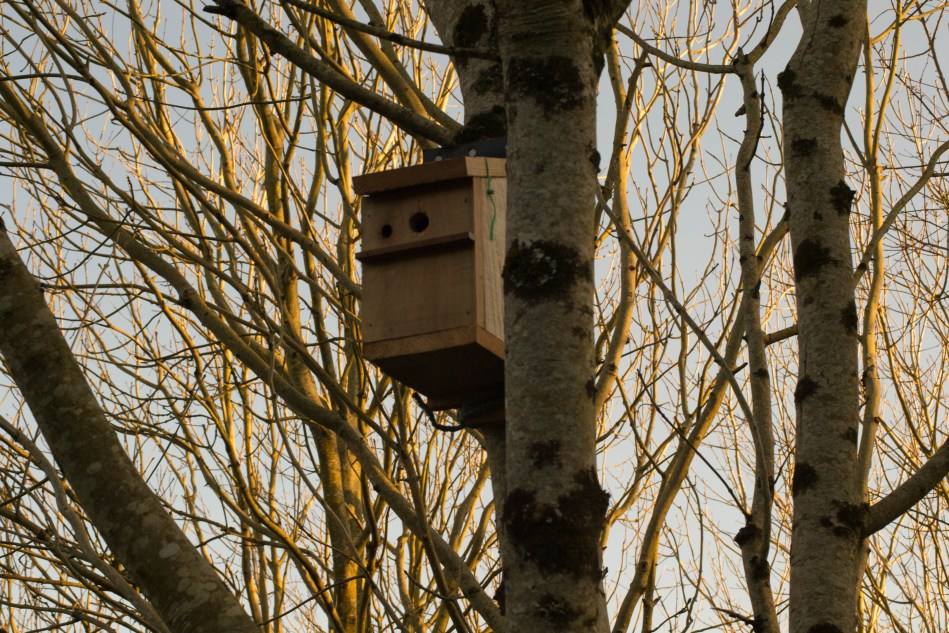 Picture of bird box in the trees
