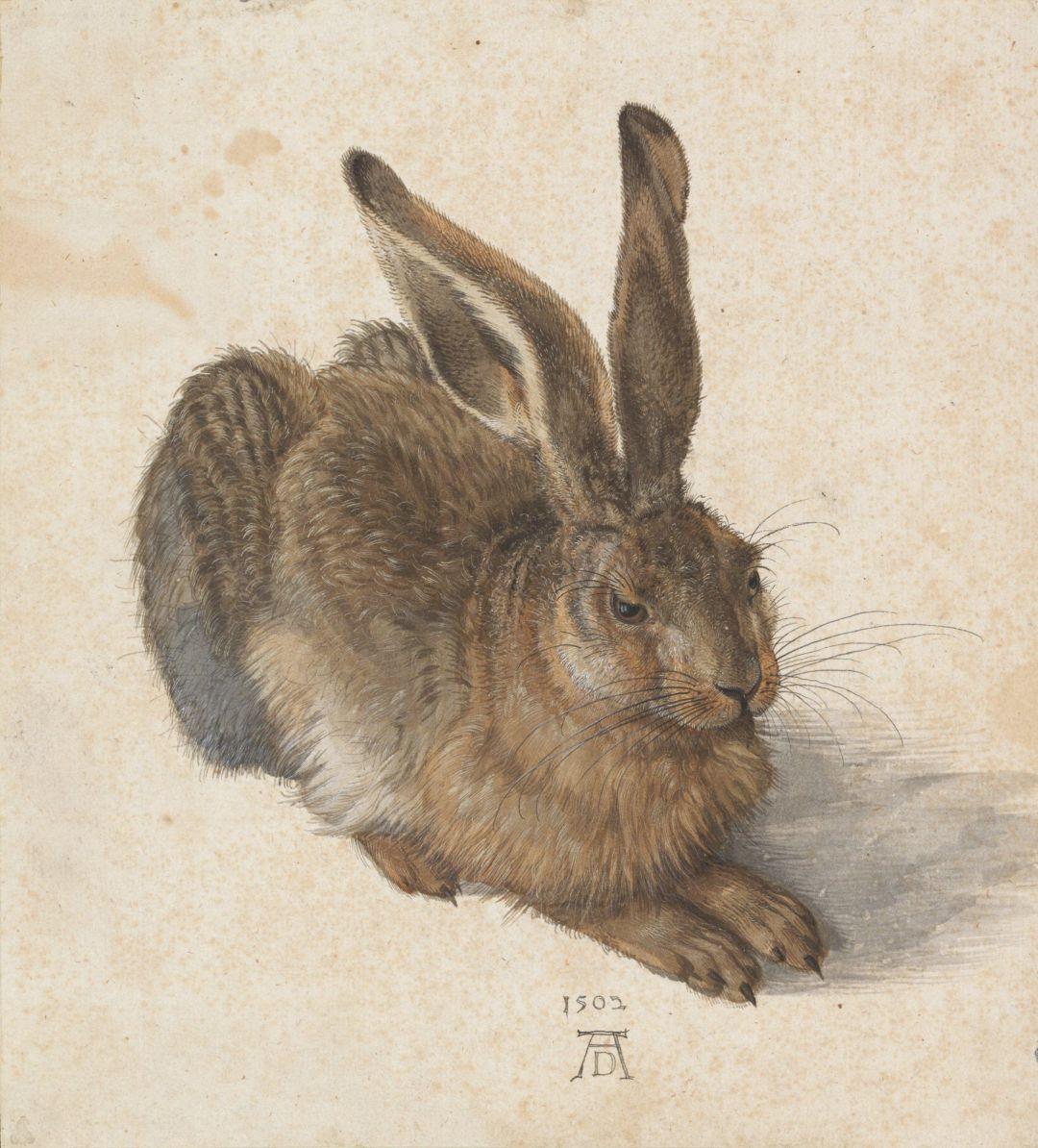 Liebre joven (Albrecht Dürer, 1502) (Albertina, Viena)