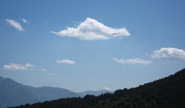 dónde ver al quebrantahuesos en el Pirineo de Huesca