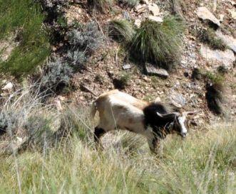 Fauna en el barranco del Búho