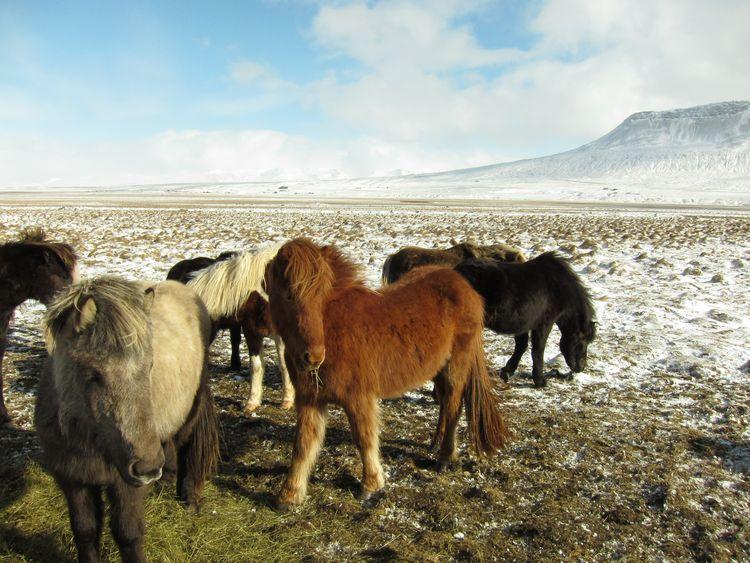 islandia-itinerario-1-semana-en-coche-17