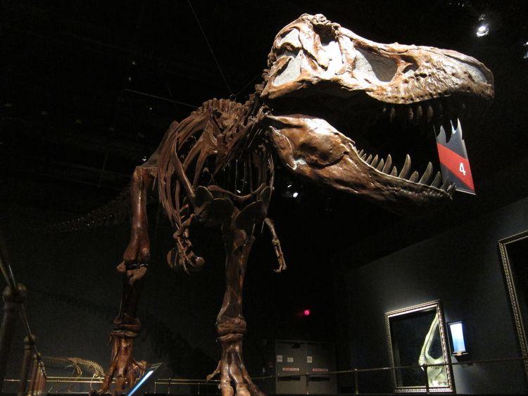 canada-02-drumheller-dinosaur-provincial-park-08