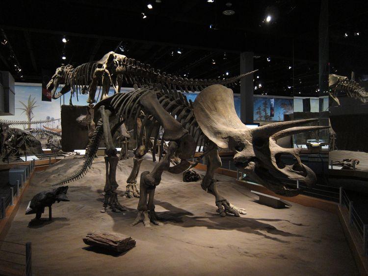 canada-02-drumheller-dinosaur-provincial-park-10