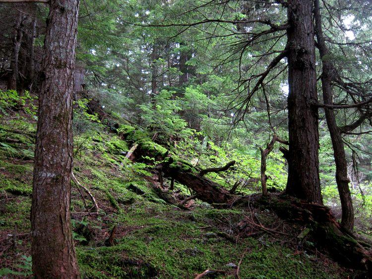canada-07-glacier-national-park-04