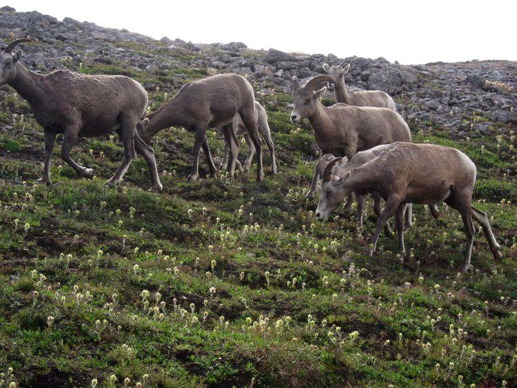 canada-08-ruta-por-icefields-parkway-25