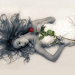 Una rosa y un beso