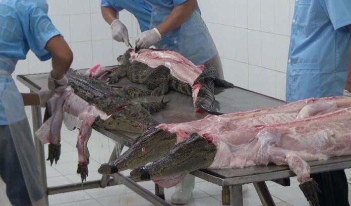 crueldad-cocodrilos-bolsos-lujo-1