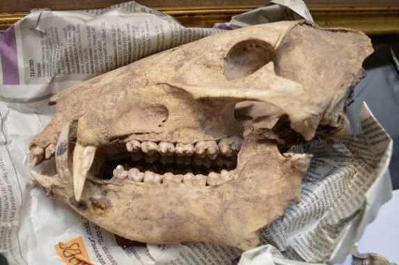 secuestro-tesoro-arqueologico-Cordoba-SF-3