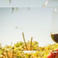 Día Nacional del Vino: Las mujeres y la Enología en esta significativa fecha.
