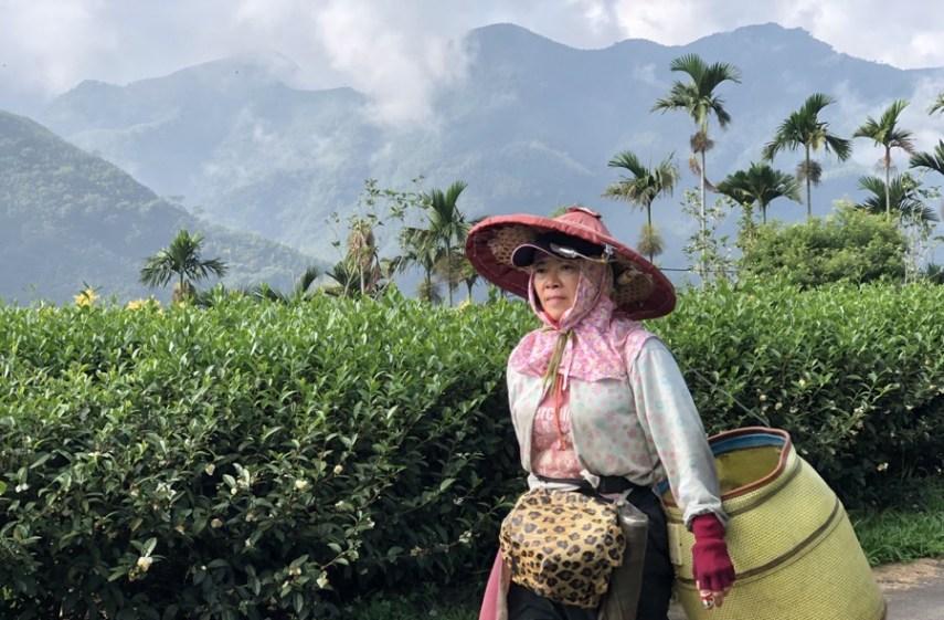 campo de té taiwanés