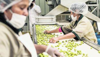 Eduardo Zegarra, investigador principal de Grade, consideró que no era necesario extender el régimen agrario por diez años más, pues las empresas del sector ya están consolidadas.