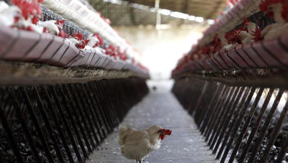 China detecta el primer caso mundial de gripe aviar H10N3 en humanos |  MUNDO | EL COMERCIO PERÚ
