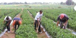 salarios minimos agricultura el salvador, salarios minimos recoleccion de algodon, salario minimo corta de cafe