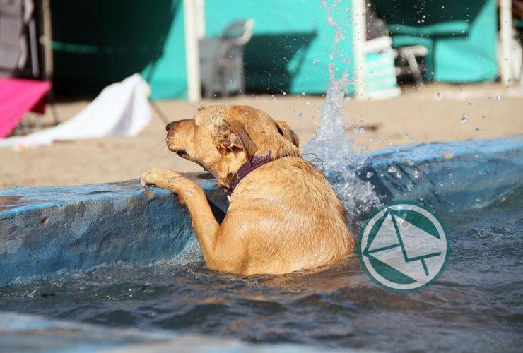 Mar del Plata cuenta con playa exclusiva para mascotas08