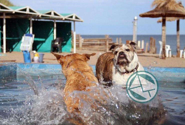 Mar del Plata cuenta con playa exclusiva para mascotas11