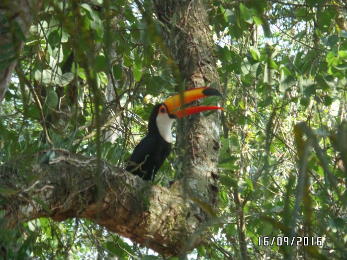 a toucan that we saw
