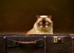 luggage-1645271_1920