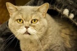 old-cat-2835769_1920