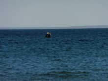 2016-6-13 Whales 1