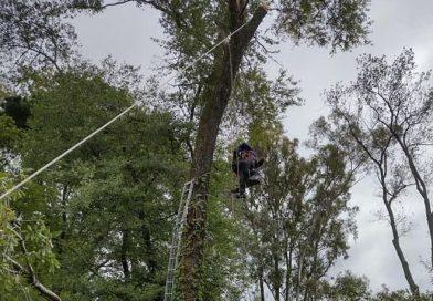 Rescataron a un hombre que había quedado atrapado en un árbol mientras realizaba una poda