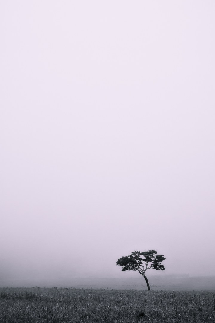 A Foggy Day - Photo