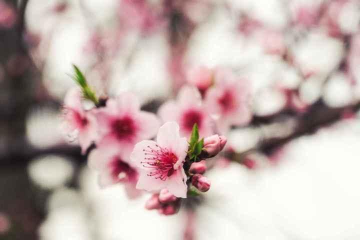 A Few Blossoms