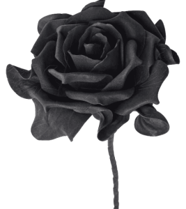 signification rose noire