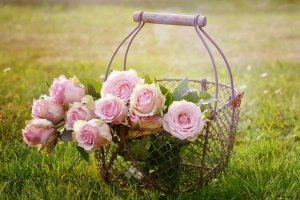 classification des roses