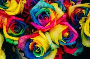 signification de couleurs de roses