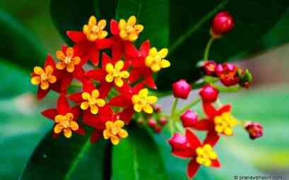 Top 40 Superbes Fleurs Tropicales : Noms et Images