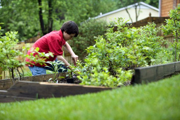 Transplanter ses rosiers