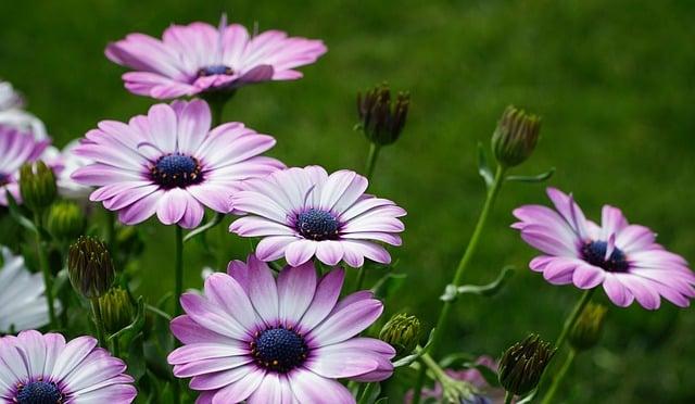 Plante Annuelle ou Vivace