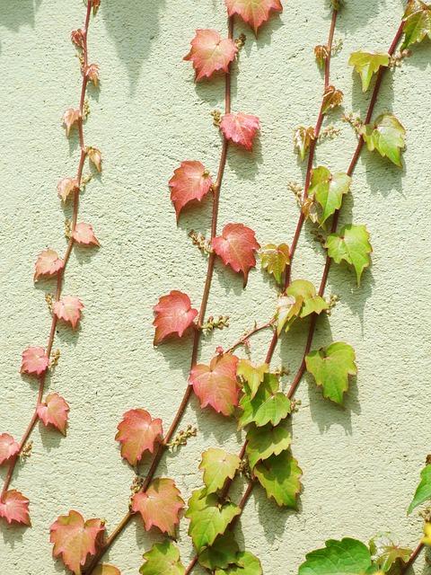 Top 20 des Plus Belles Plantes Grimpantes (pour votre jardin)