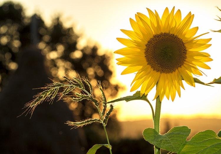Nursing Home Love Story #2: Sunshine