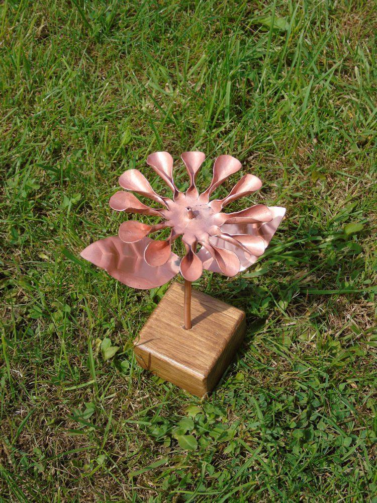 osteospernum copper flower from above