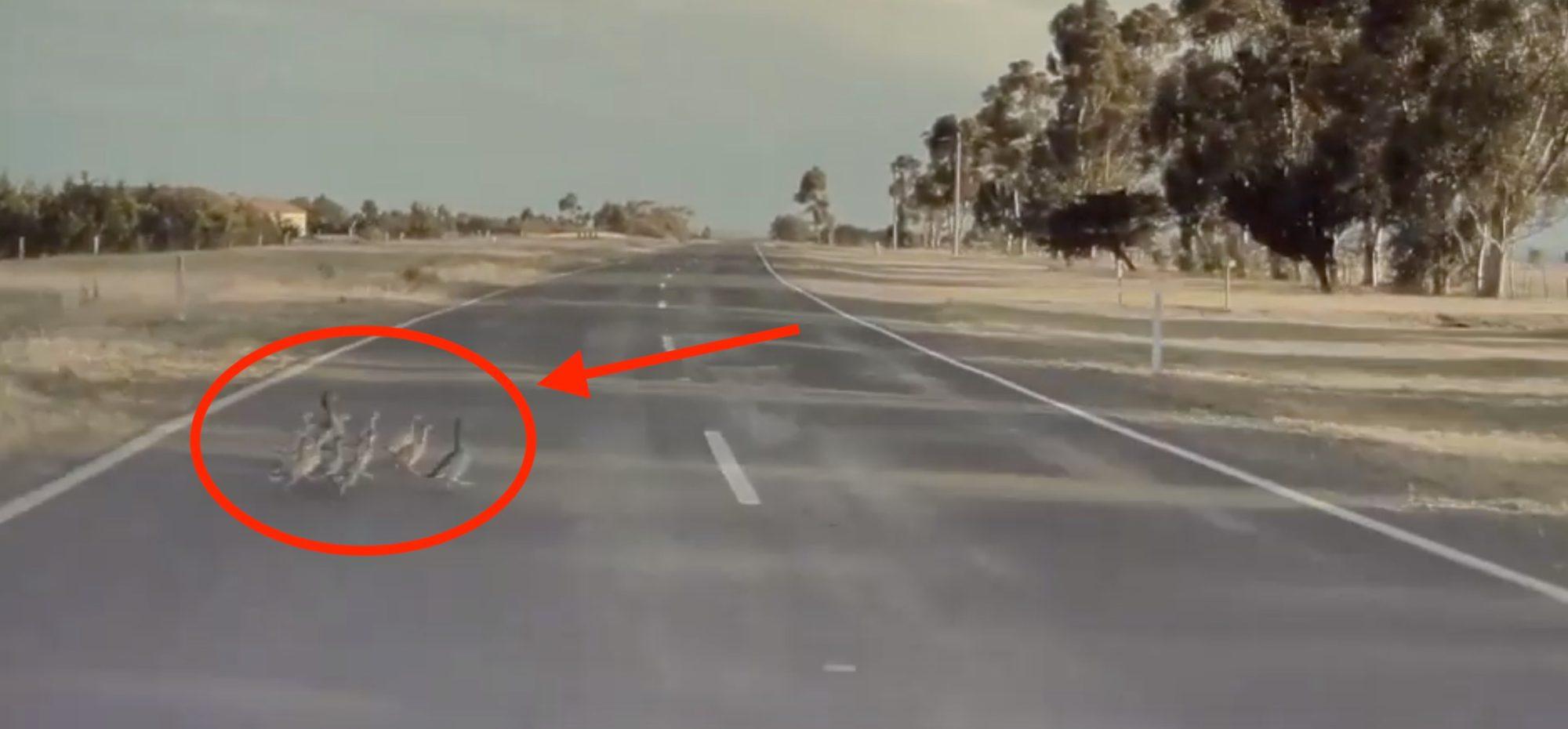 Tesla-Autopilot-avoid-ducks.jpg