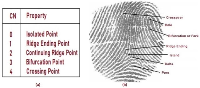 Sample Fingerprint Showing Ridge Characteristics (1)