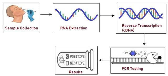 RTPCR Test steps
