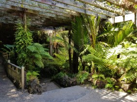 Fernery at the back of the Wintergarden