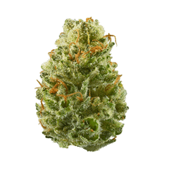 Strawberry Cough marijuana strain for smoke , retailaing
