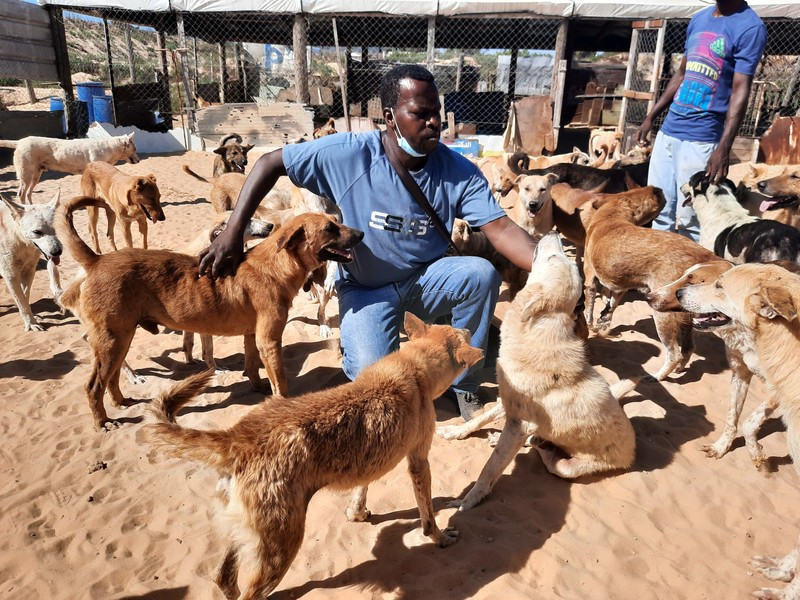 A man sits among a pack of dogs