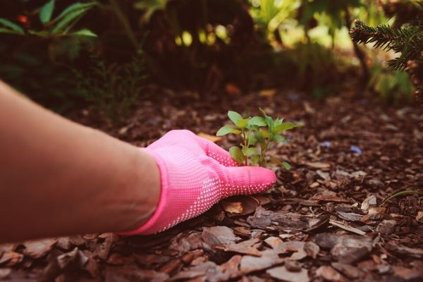 Retrier les mauvaises herbes pour préserver son jardin sans effort